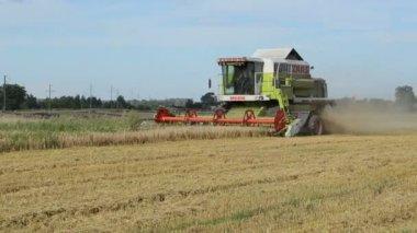 Combinar a colheita de trigo — Vídeo stock