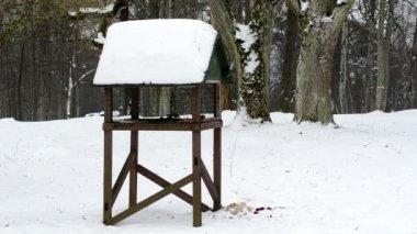 Fågelbordet vinter snö — Stockvideo