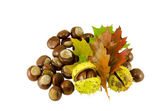 Chestnuts autumn composition and sear leaves — Stock Photo