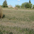 Man move straw bale field — Stock Video