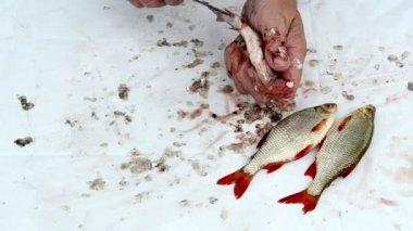 Fisherman clean fish gut — Stock Video