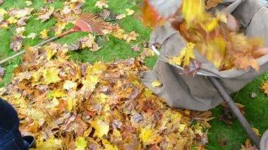 Woman load barrow leaves — Stock Video