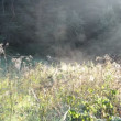 Stock Video: Meadow spider web fog