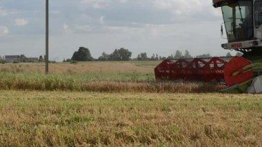 Cosechadora de trigo de la cosecha — Vídeo de Stock