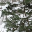 Snow christmas tree clean — Stock Video #19260521