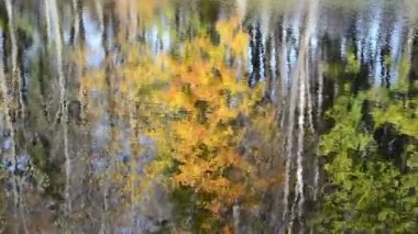 Lake reflect autumn tree — Stok video