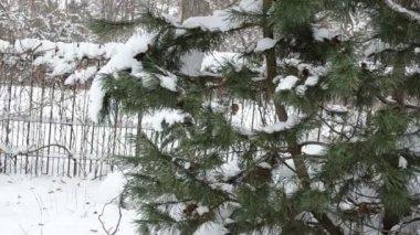 Snö julgran ren — Stockvideo