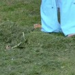Video Stock: Womrake grass lawn