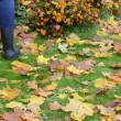 Rake autumn leaves — Stock Video