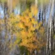 Lake reflect autumn tree — Video
