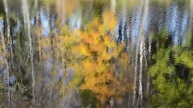 Lake reflect autumn tree — Wideo stockowe