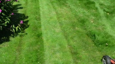 Worker mow lawn cutter — Stockvideo