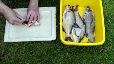 Hands salting fresh fish — Stock Video
