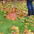 Woman rubber boots jeans rake colorful autumn maple tree leaf — Видео