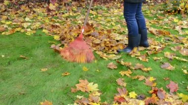 Woman rubber boots jeans rake colorful autumn maple tree leaf — 图库视频影像