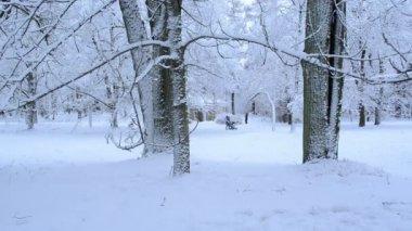 Wandeling bomen dichte sneeuw laag winter park — Stockvideo