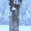 Vídeo de stock: Colorful bird houses covered snow hang dead tree trunk winter