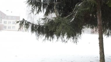 Fir christmas tree branch city snowstorm snow fall strong wind — Stock Video