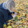Stock Video: Womhand pick up gather color maple tree leaves park