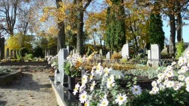 Małgorzata kwiat rosnąć cmentarzu grób jesienne drzewo gałąź ruch — Wideo stockowe