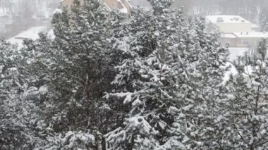 Cold winters heavy snowfall on pine forest and streets — Stok video