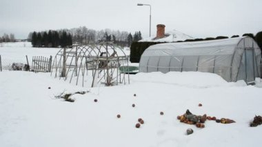 Wooden diy polythene greenhouse snow rotten apples winter garden — Vídeo de Stock