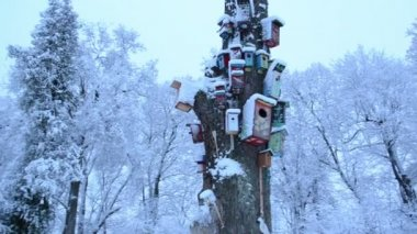 Colorful bird houses snow dead tree trunk park winter — Stock Video