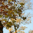 Stock Video: Old rural wooden church tower cross autumn conker tree leaves