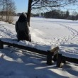 Stock Video: Womcoat sit bench snow admire frozen lake stand walk