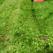 Stock Video: Woman girl skirt flip-flop shoes cut lawn grass mower in yard