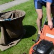 Man cut mow lawn cutter mower put grass into bag — Stock Video