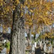 Stock Video: Autumn birch tree branch move wind old cemetery grave monument