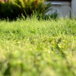Meadow grass closeup grass lawn cutter mower worker pass shadow — Stock Video