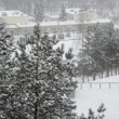 Snowflakes dance above the snow covered pine tops and nursery — Stock Video