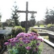 Stock Video: Chrysanthemums autumn flowers cemetery grave monuments cross
