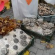 Ecological natural edible eatable mushroom shown rural fair — Stock Video