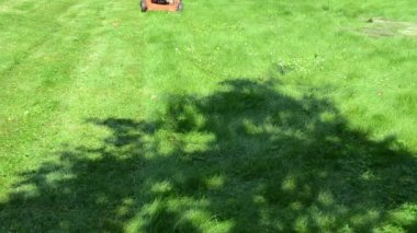 Worker man shorts flip-flop shoes mow lawn in yard — Stock Video