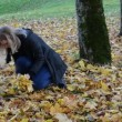 Стоковое видео: Womhand pick up gather colorful maple tree leaves park