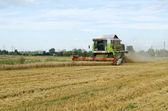 Combine tractor harvest wheat agriculture field — Stock Photo
