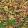 Video Stock: Womrubber boot leaves