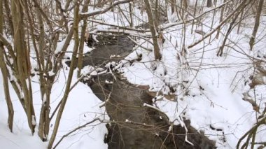 Wild forest stream creek flow willows nutwood trees snow winter — Vidéo