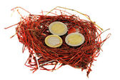 Red bird nest euro coins money concept white — Stock Photo