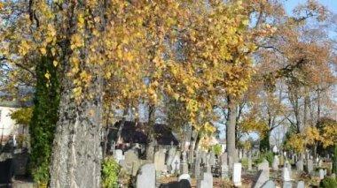 Barevné podzimní větví břízy rostou venkovských země hřbitov — Stock video