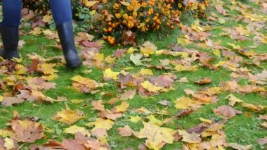 Woman rubber boots rake autumn maple tree leaf flower bed — Stock Video