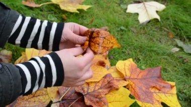 Manos hacen decorativas flor hermosa hoja de otoño — Vídeo de stock