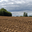 Stock Photo: Plowed agriculture field trees growing soil