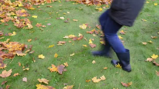 Mujer sacudida árbol rama hojas coloridas hojas caen en otoño — Vídeo de stock
