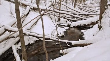 Creek broken tree snow — Vídeo Stock
