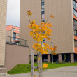 Stock Photo: Small colorful tree modern flat houses autumn