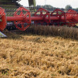 Closeup combine harvest wheat agriculture field - Stock Photo